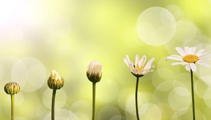 Blog: Insight Inquiry: Calling Forth Inner Wisdom