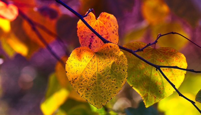 Blog: Reflections on the Fall Equinox